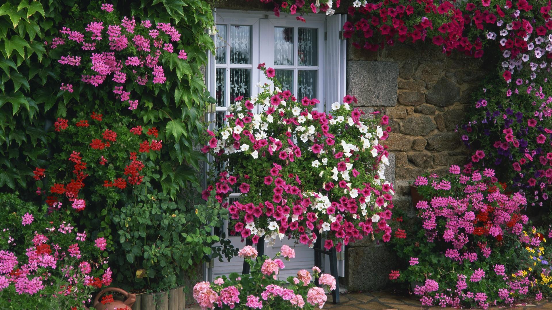 [46+] Free Summer Garden Desktop Wallpaper On WallpaperSafari