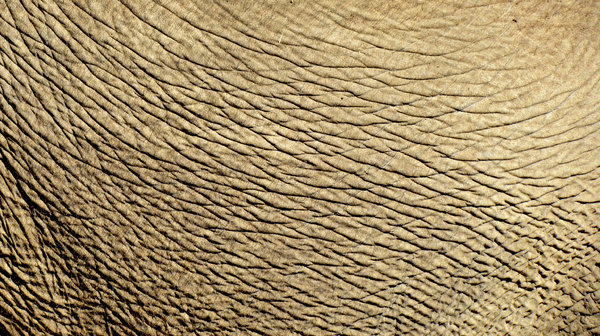 elephant skin wallpaper image search results 600x336
