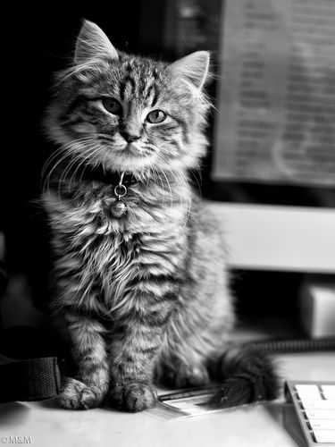 Cute Cat and iMac screensaver for Amazon Kindle 3 375x500