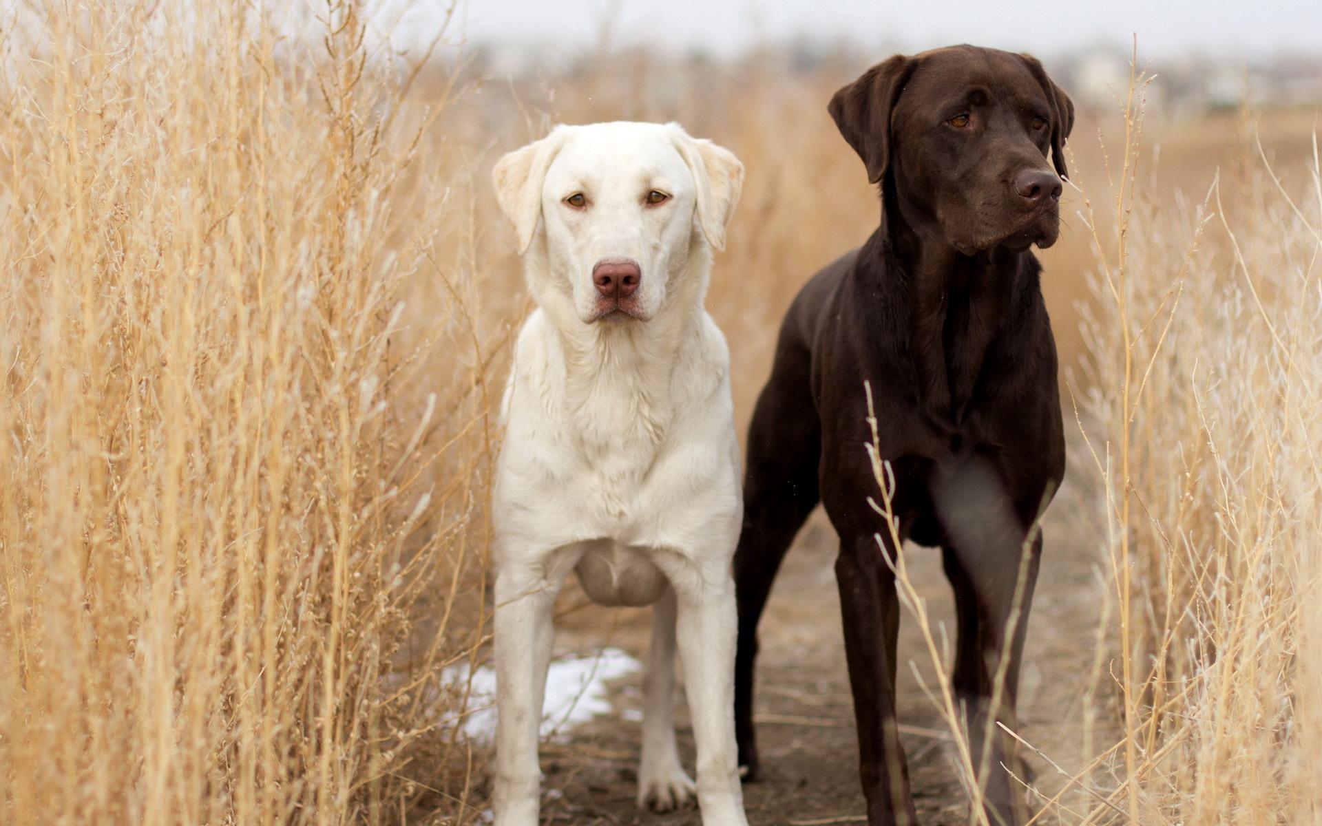 Черно-белый пес на полу  № 1157354 загрузить