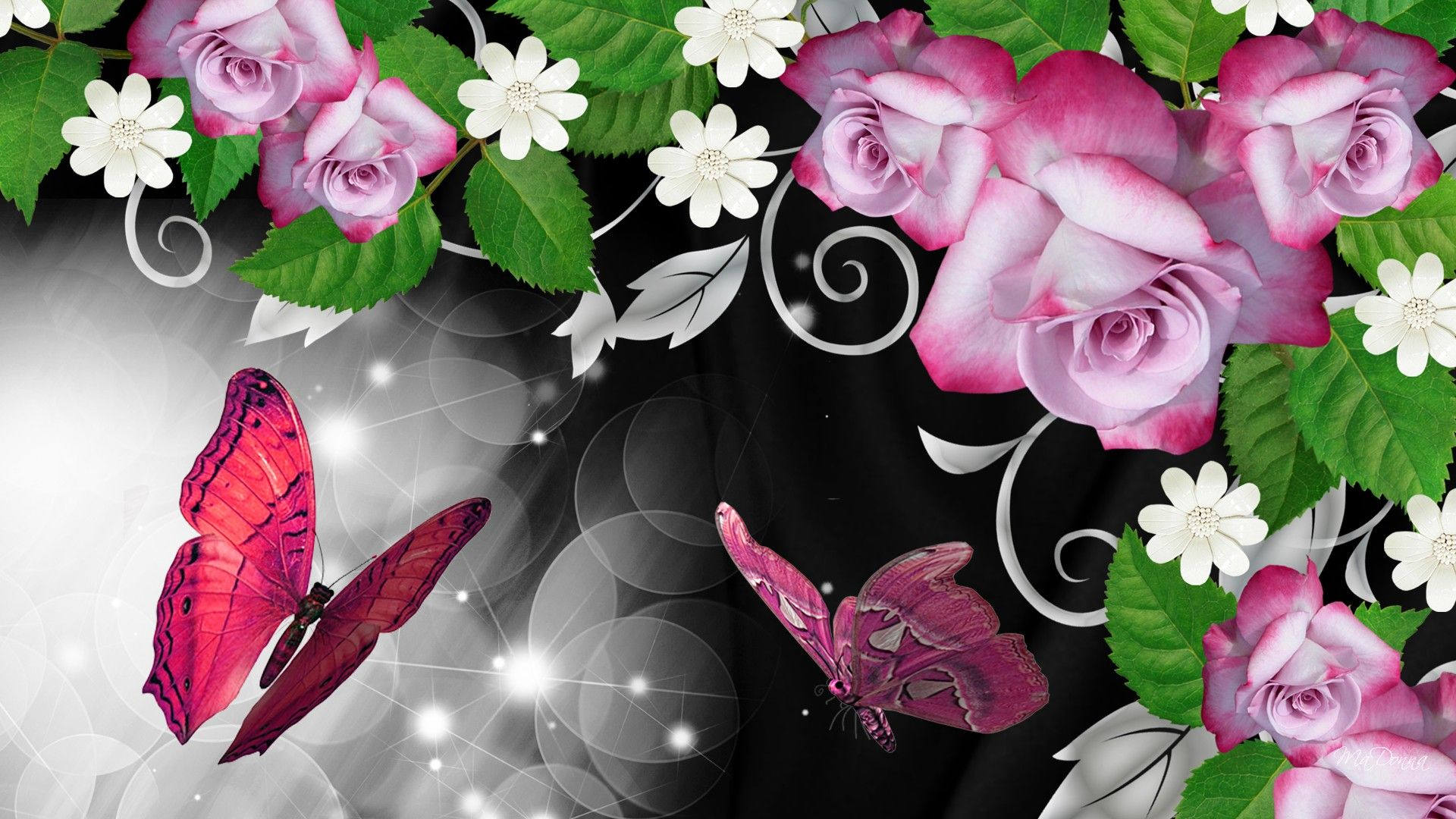 Pink Rose Butterfly HD Pink Roses Butterfly Shine Wallpaper 1920x1080
