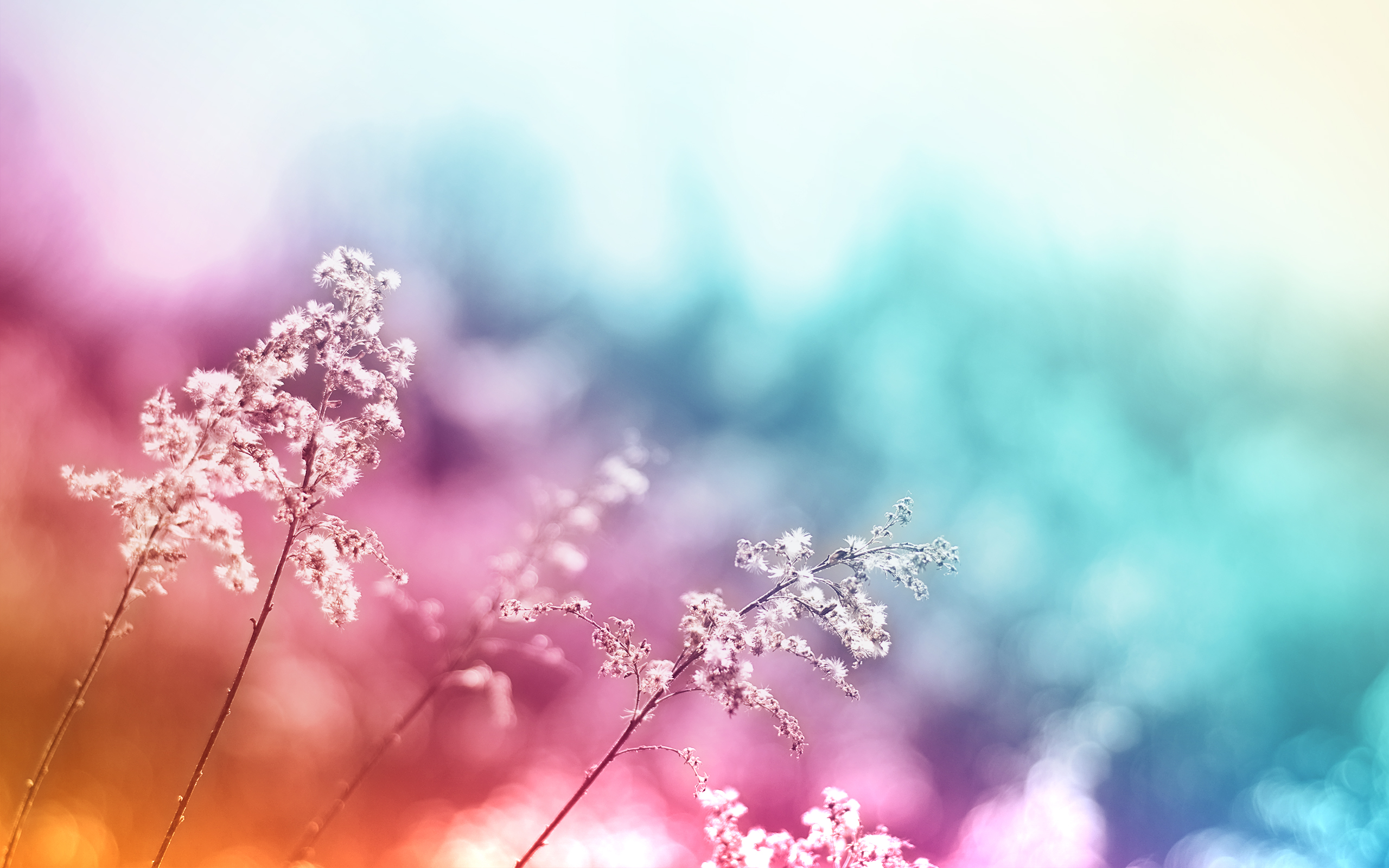 Abstract Colorful Desktop Background Wallpaper 2560x1600