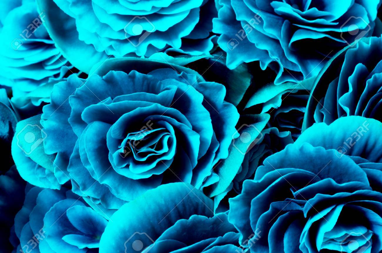 Flower Background Blue Begonias Symbol Of Love And Desire For 1300x861