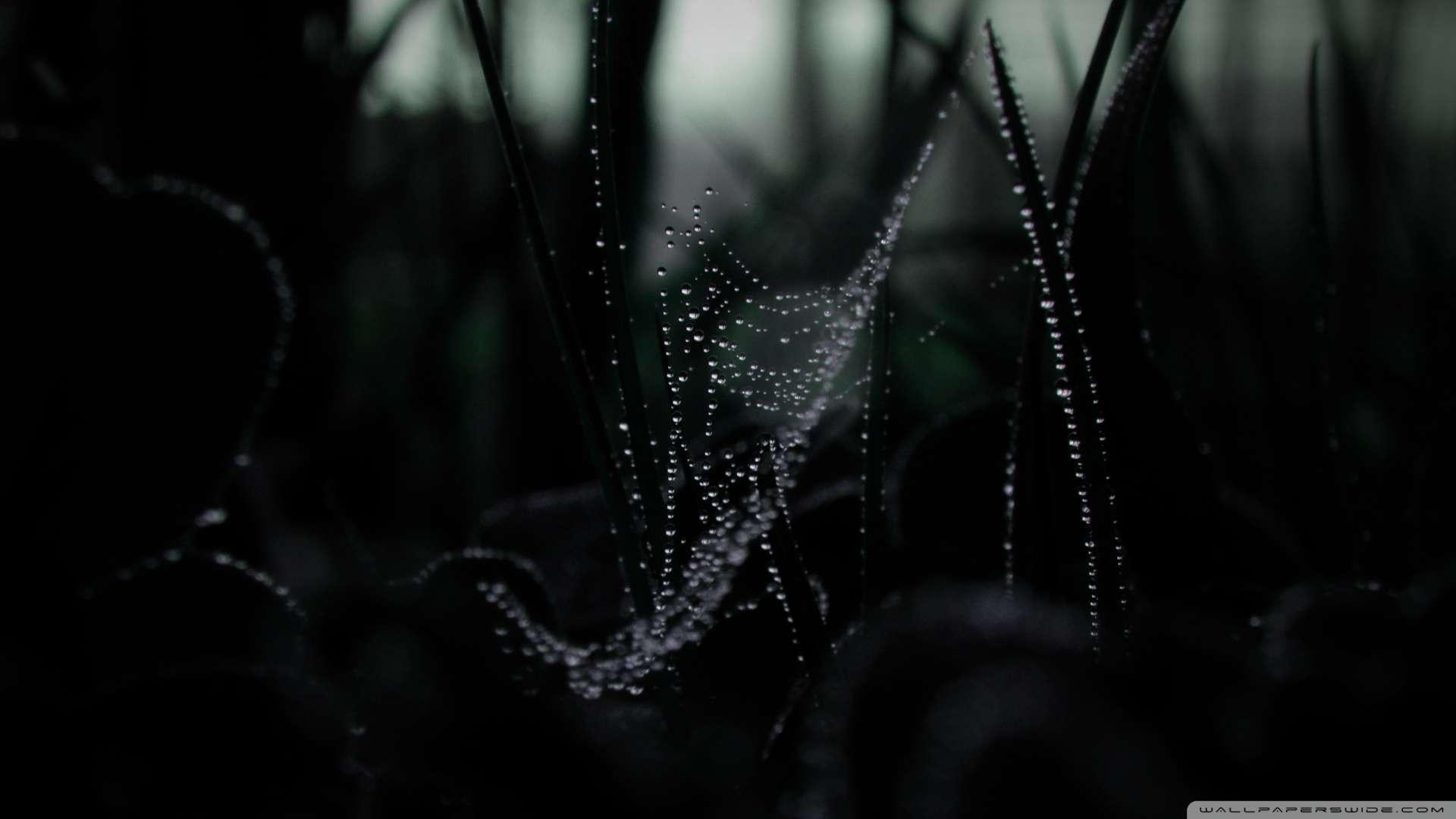 Wallpaper Dew On Spider Web Macro Wallpaper 1080p HD Upload at 1920x1080