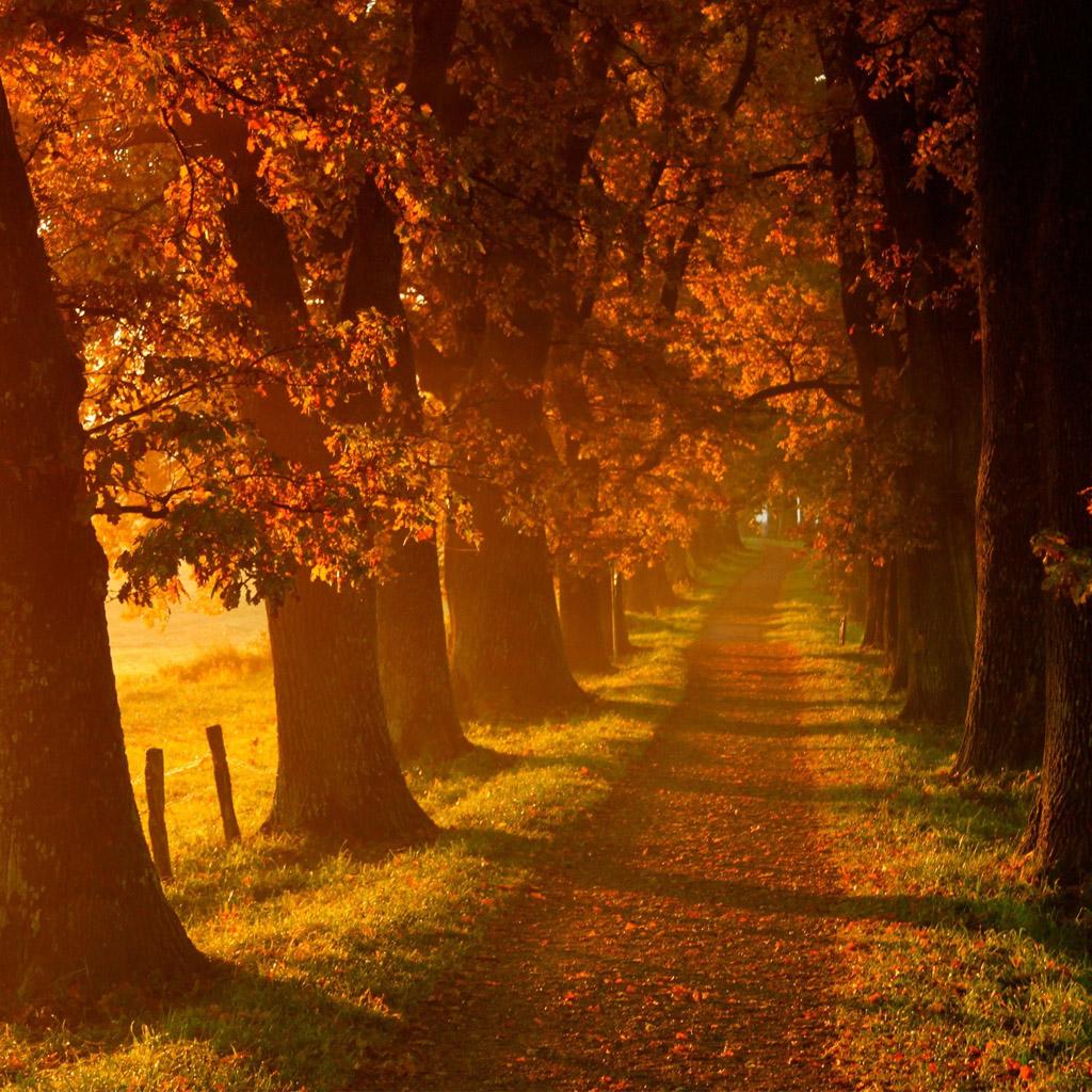Autumn walk road iPad Wallpaper Download iPhone Wallpapers iPad 1024x1024