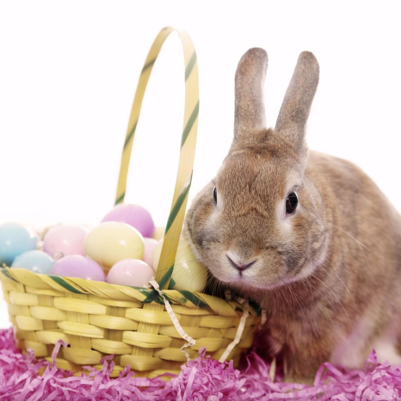 Cute Happy Easter 4K Wallpapers 4K Wallpaper 1280x1280