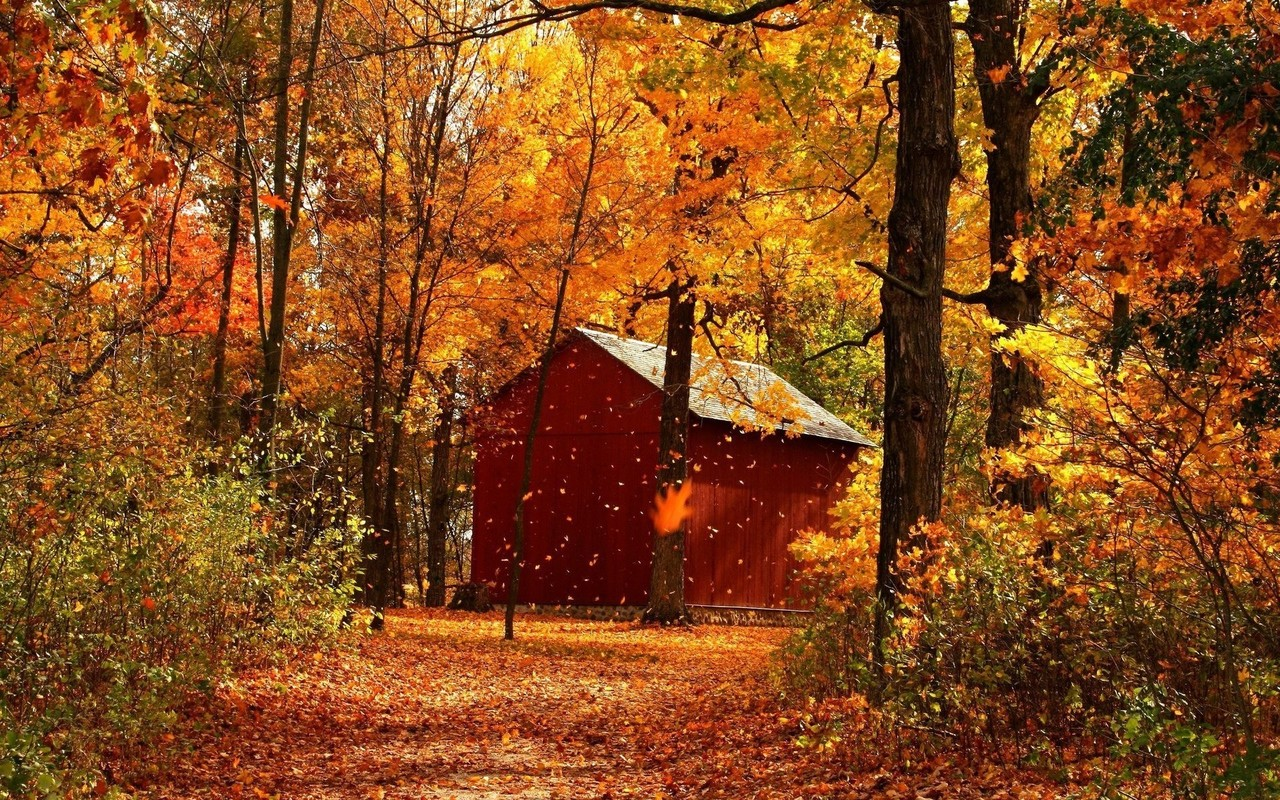 Red barn in autumn forest wallpaper 6421 1280x800