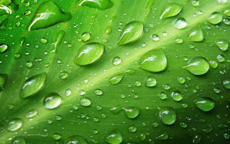 [49+] Green Nature Wallpaper on WallpaperSafari