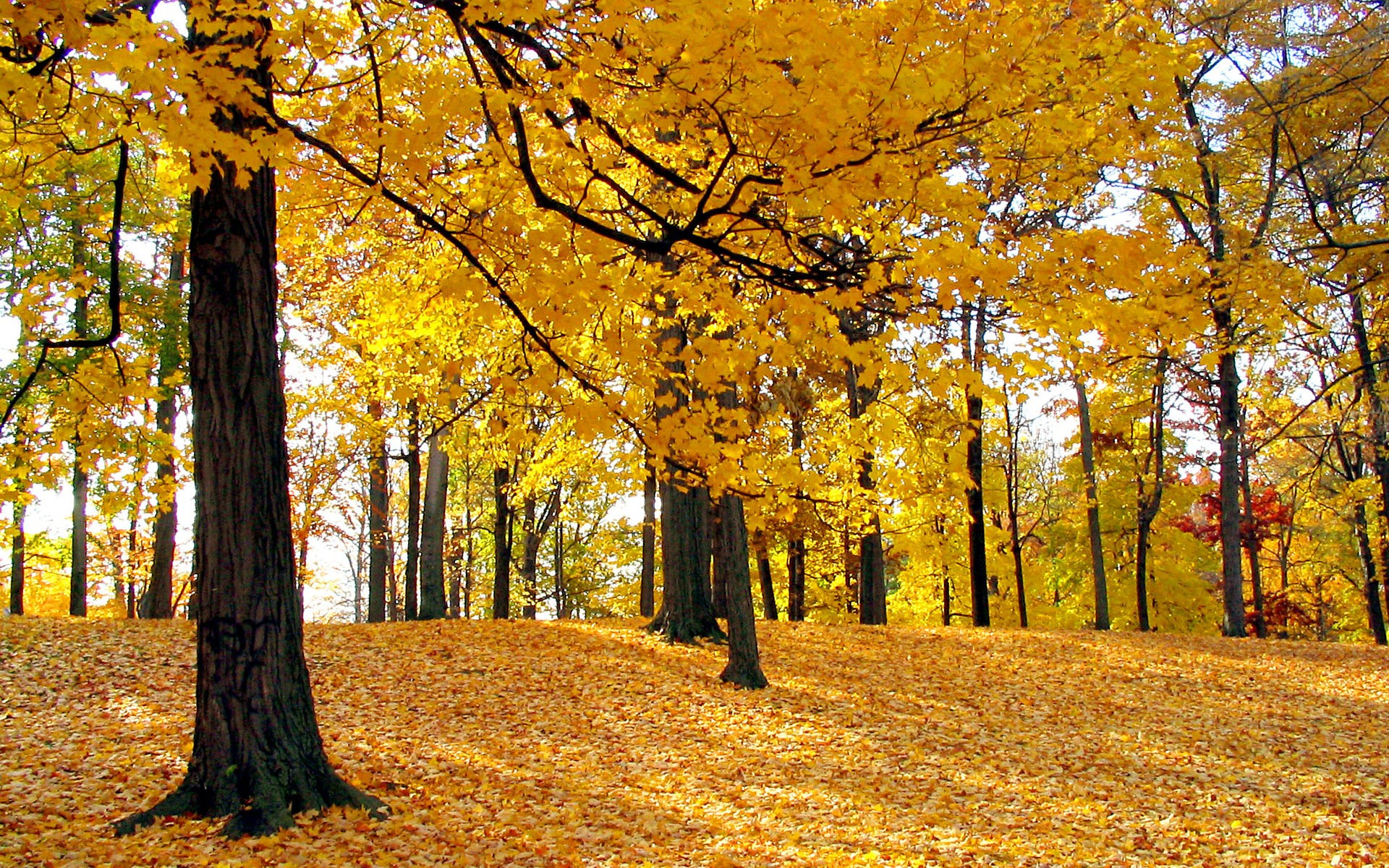 autumn leaves desktop wallpaper   wwwwallpapers in hdcom 1920x1200