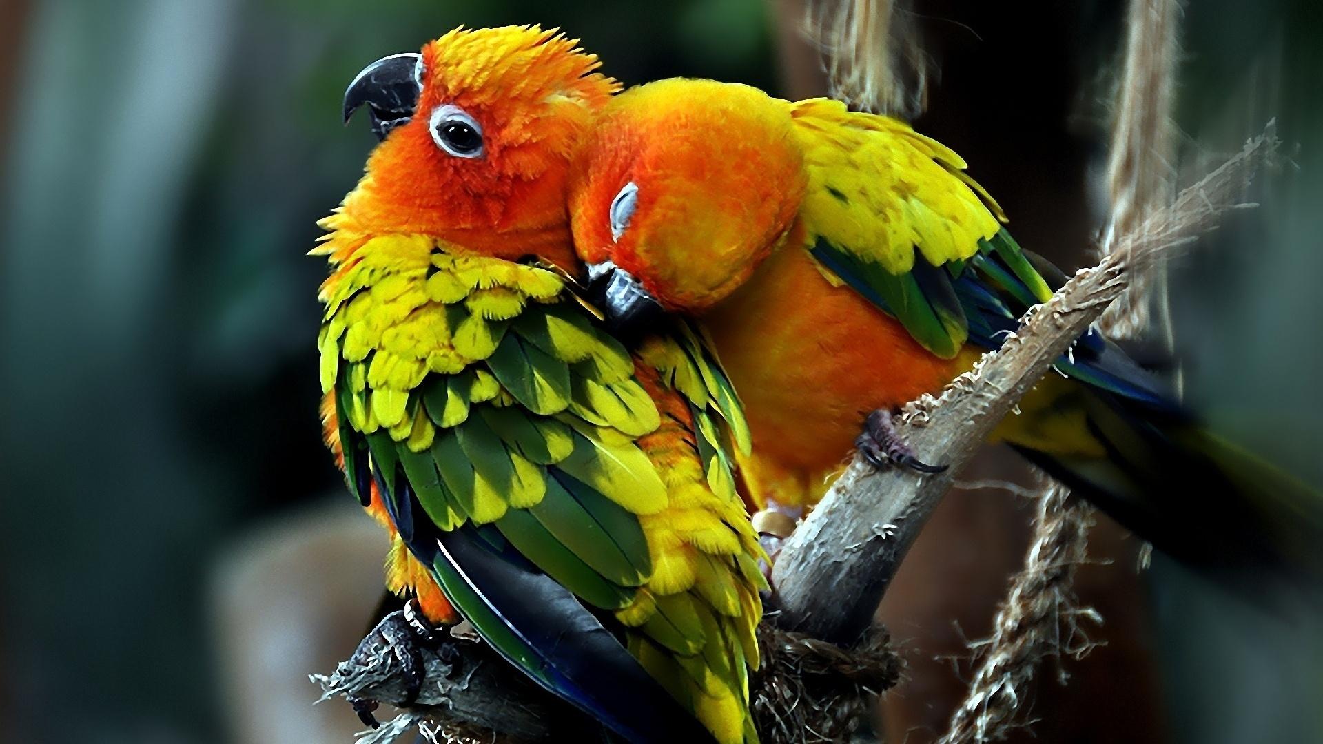 Download Birds Beautiful Colorful Bird Wallng Wallpaper 1920x1080 1920x1080