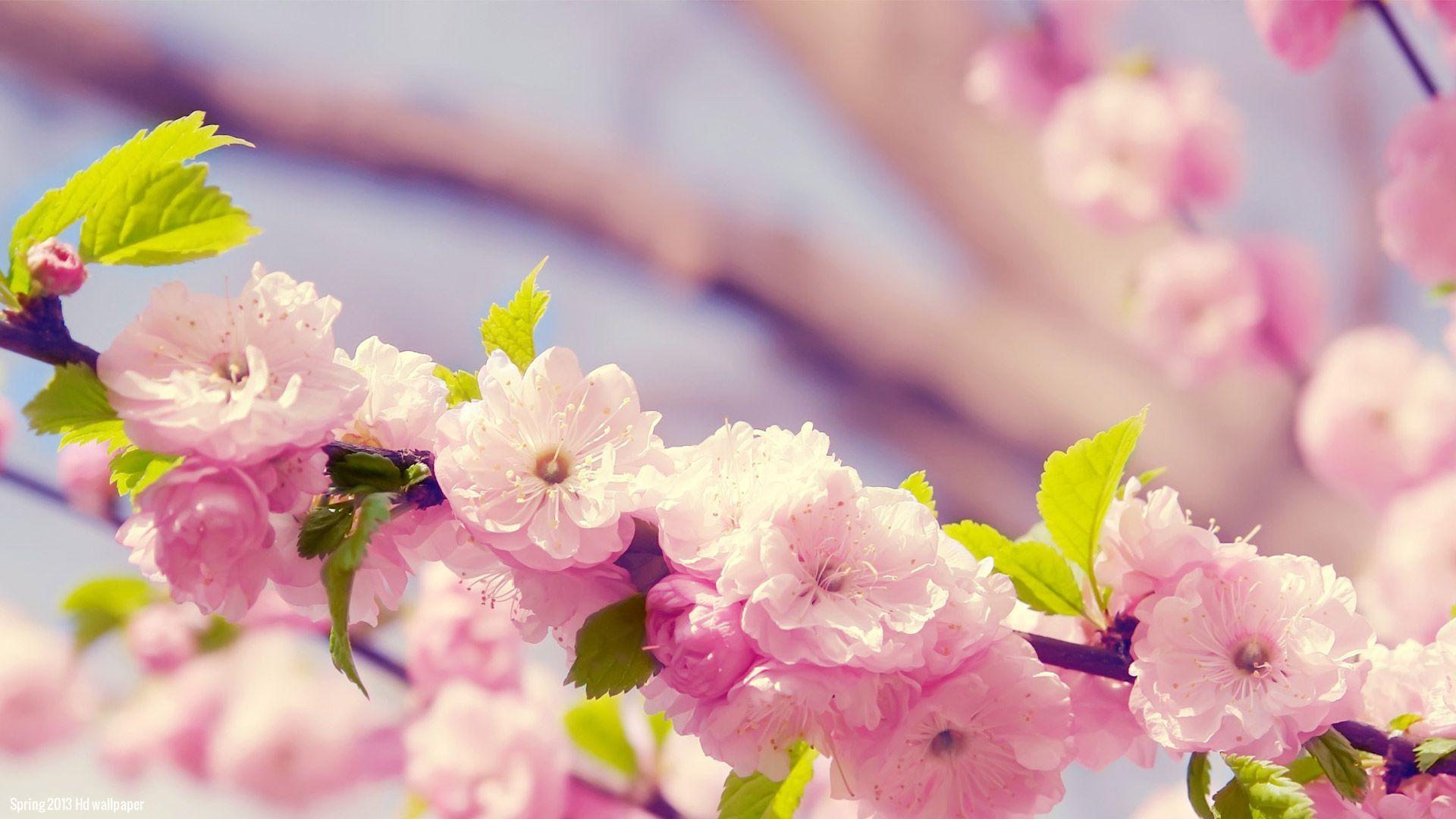Spring Flowers Wallpaper Wide at Landscape Monodomo 1920x1080