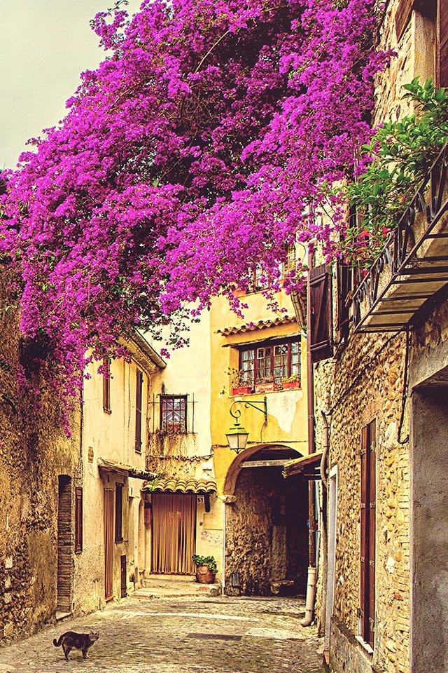 Provence iPhone Wallpaper HD 640x960