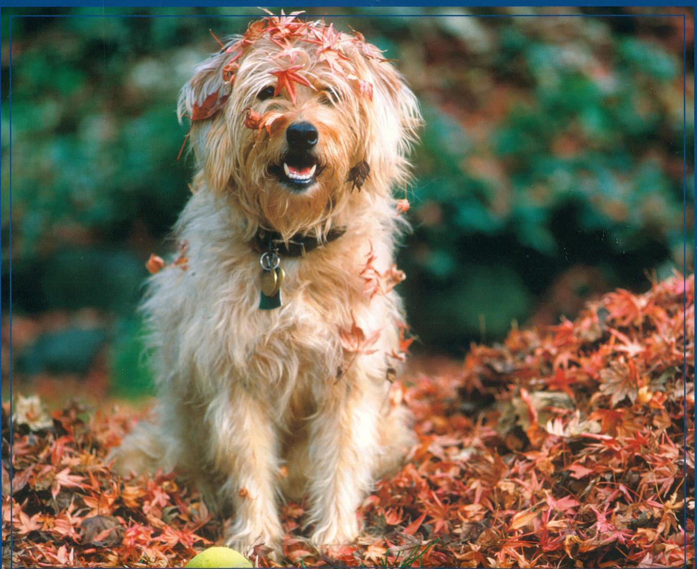 Dogs Fall Fun 1359x1109
