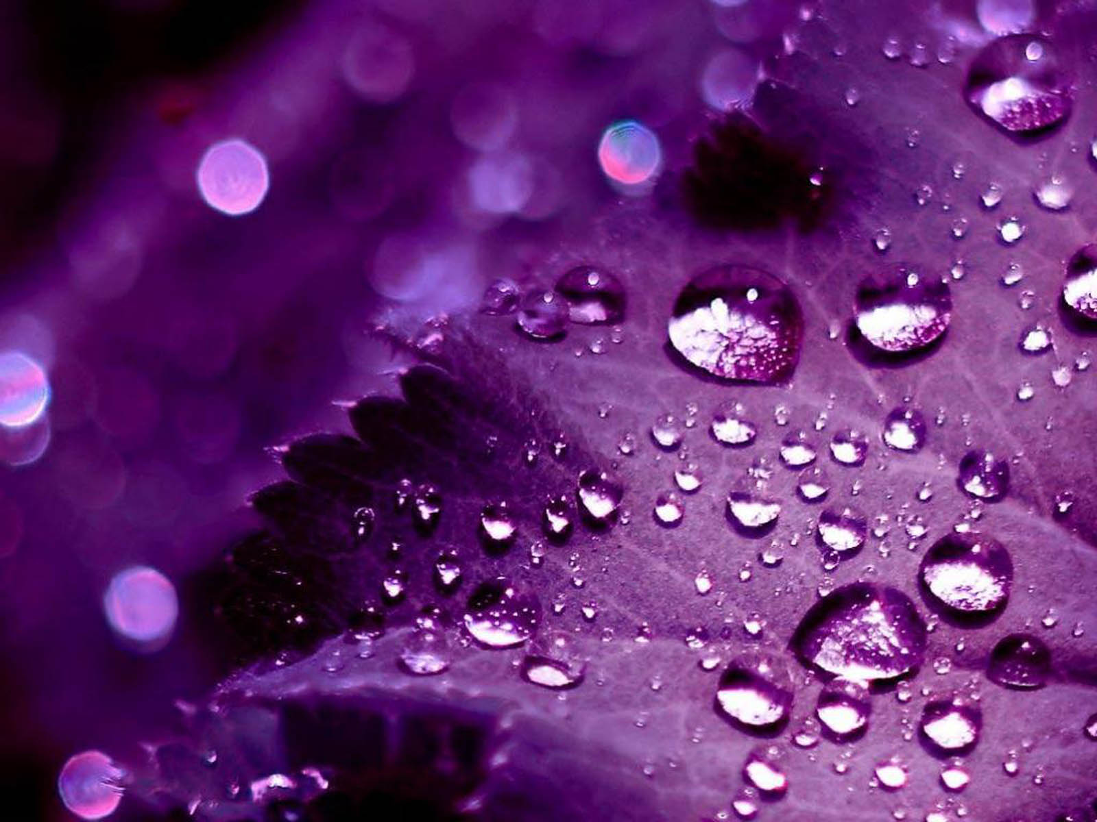 XS Wallpapers HD 3D Purple Wallpapers 1600x1200