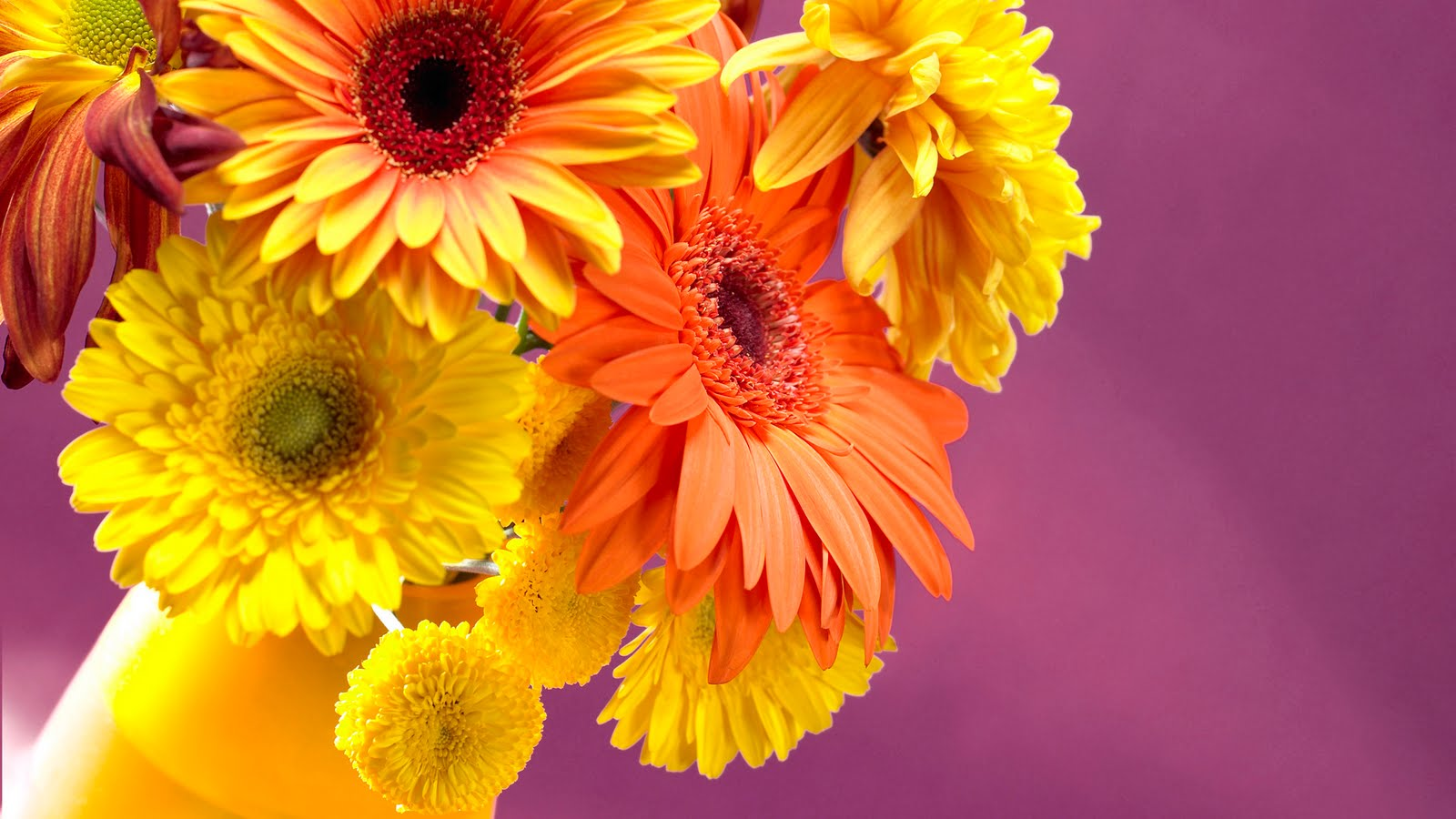 Jaspreet Rekhi 40 Colorful Flowers Wallpapers Full HD 1080prar 1600x900