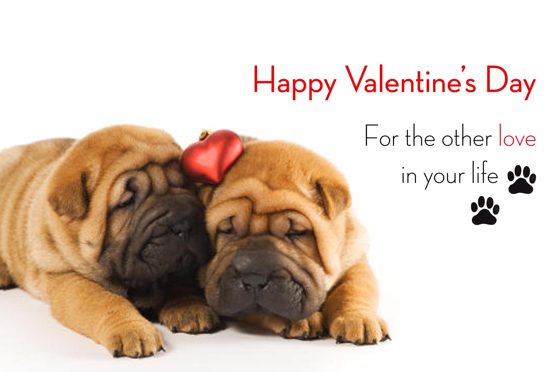happy valentines day dog dog talk