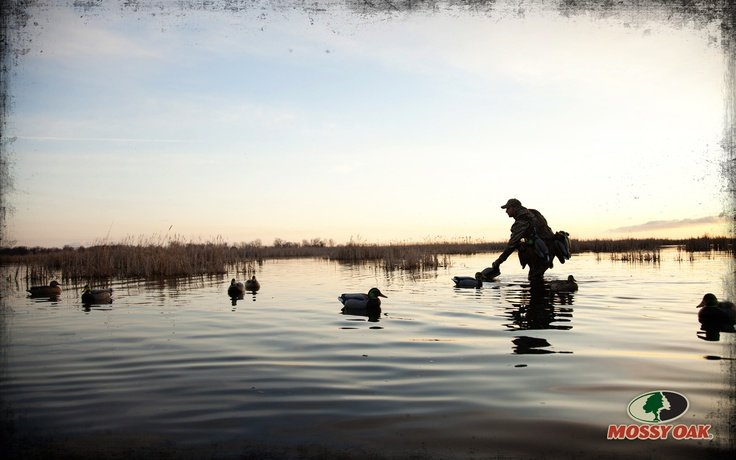 Duck Hunting Backgrounds