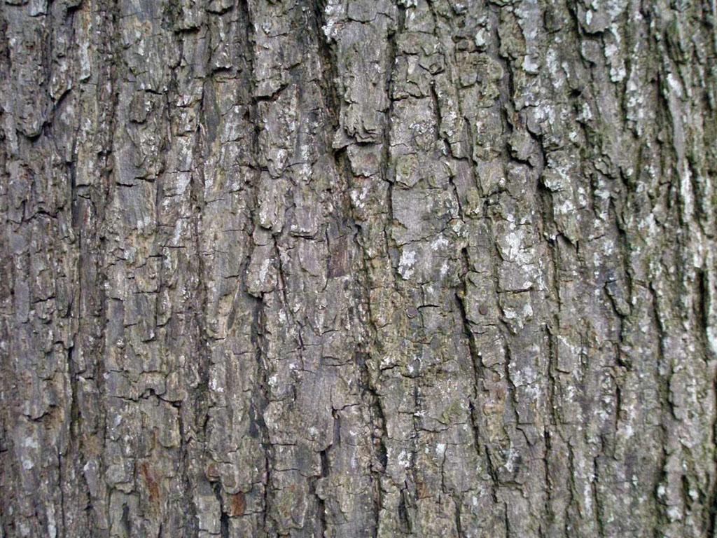 Keywords Tree Bark Wallpapers Tree Bark DesktopWallpapers Tree Bark 1024x768