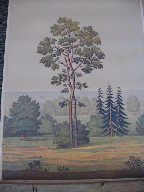 Full room vintage wallpaper murals by The Schmitz Horning Co   Retro 500x667