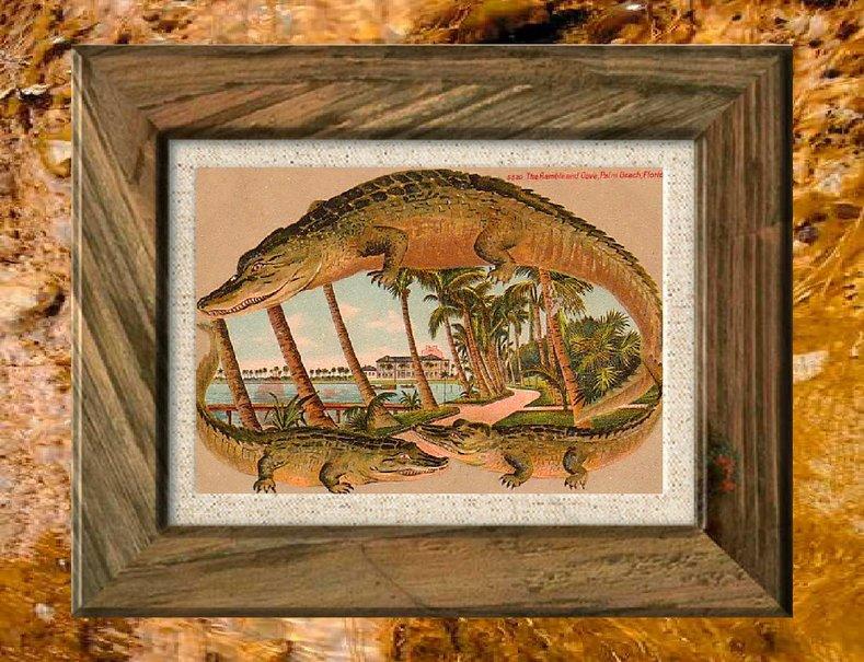 frontire dalligator 2 Wallpaper   ForWallpapercom 789x605