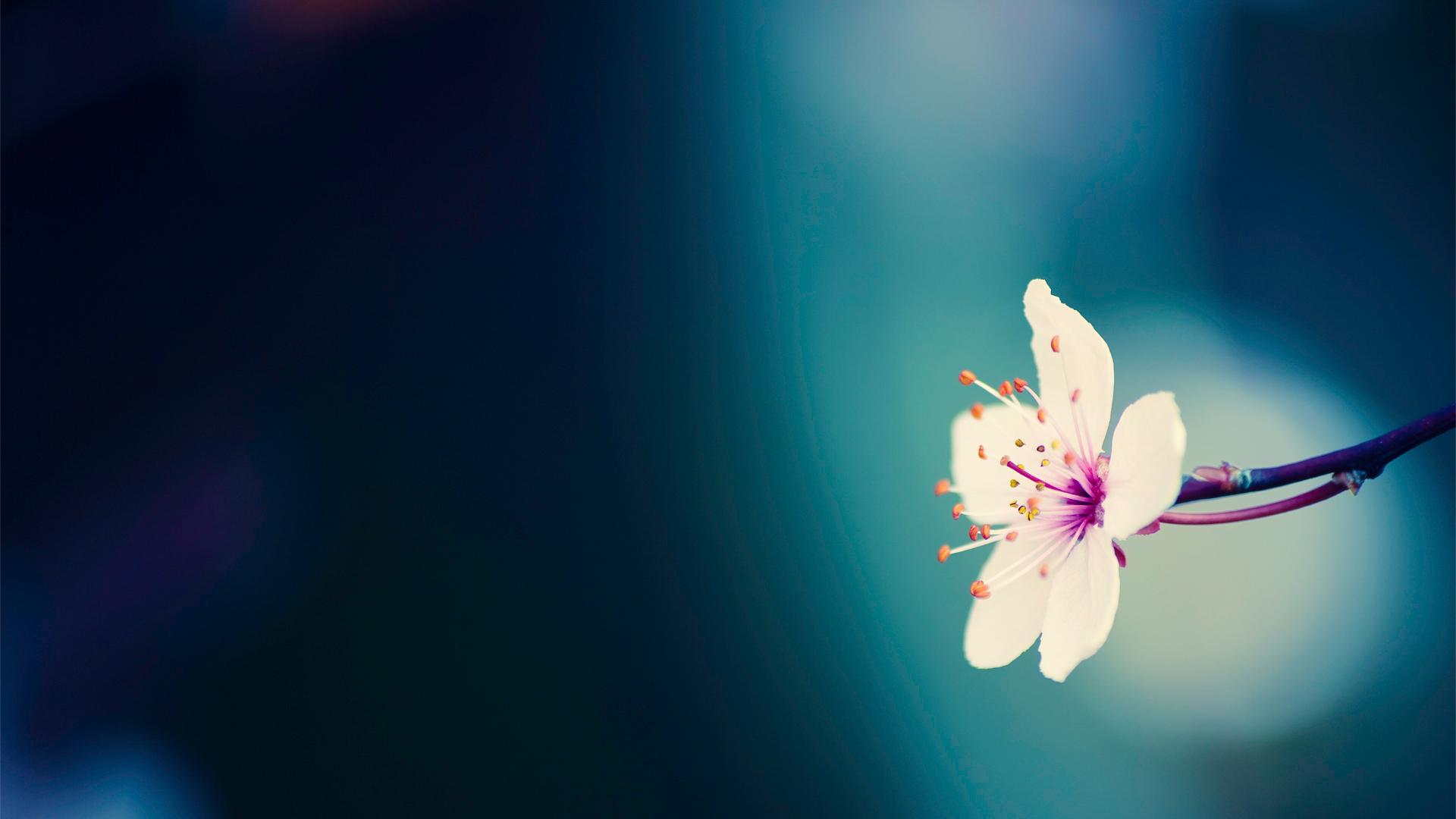 flower wallpaper background - wallpapersafari