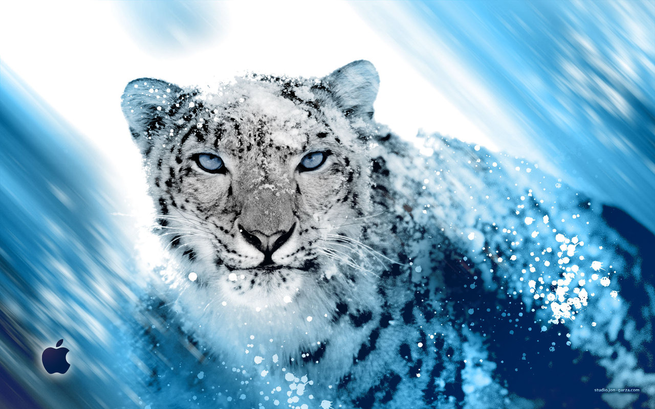 66 Snow Leopard Wallpaper On Wallpapersafari