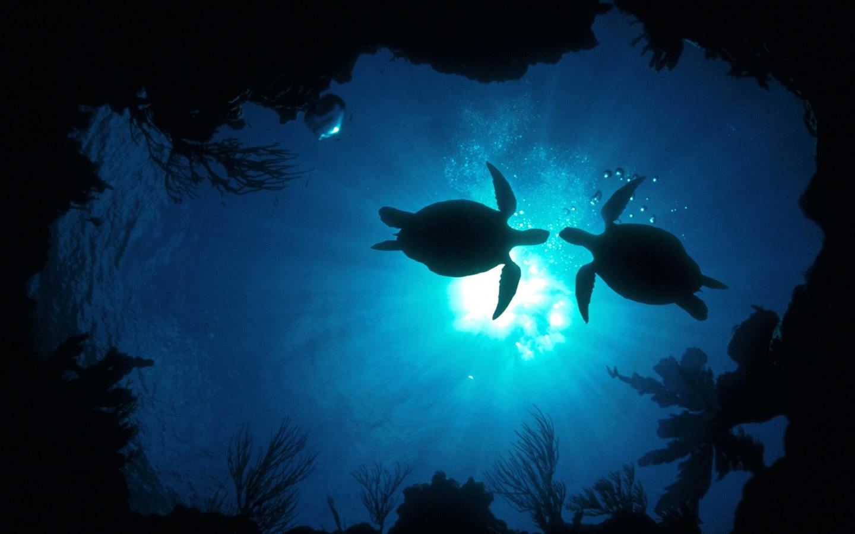 Free Download Wallpaper Desktop Wallpaper Underwater 7 1440x900 For Your Desktop Mobile Tablet Explore 46 Sea Turtles Desktop Wallpaper Turtle Wallpapers For Desktop Sea Turtle Iphone Wallpaper Baby Sea Turtle Wallpaper
