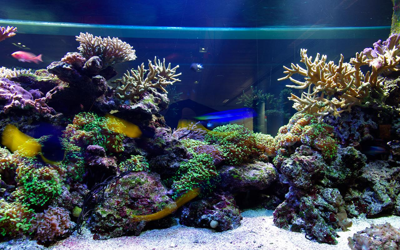 3d Desktop Aquarium Live Wallpaper Download 1280x800