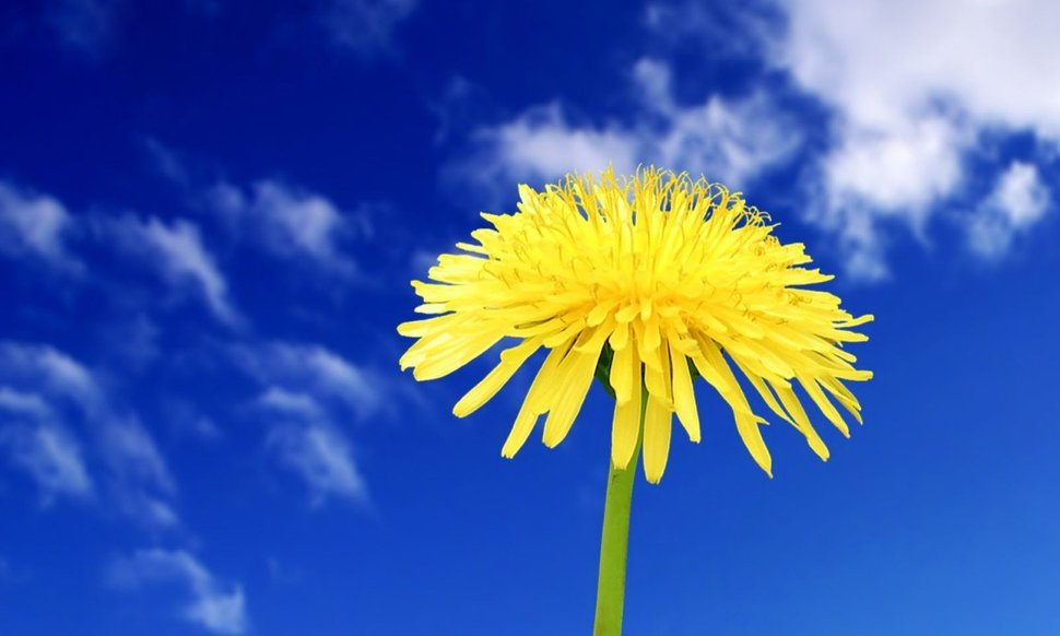 The Best Blue And Yellow Flowers Wallpaper JPG