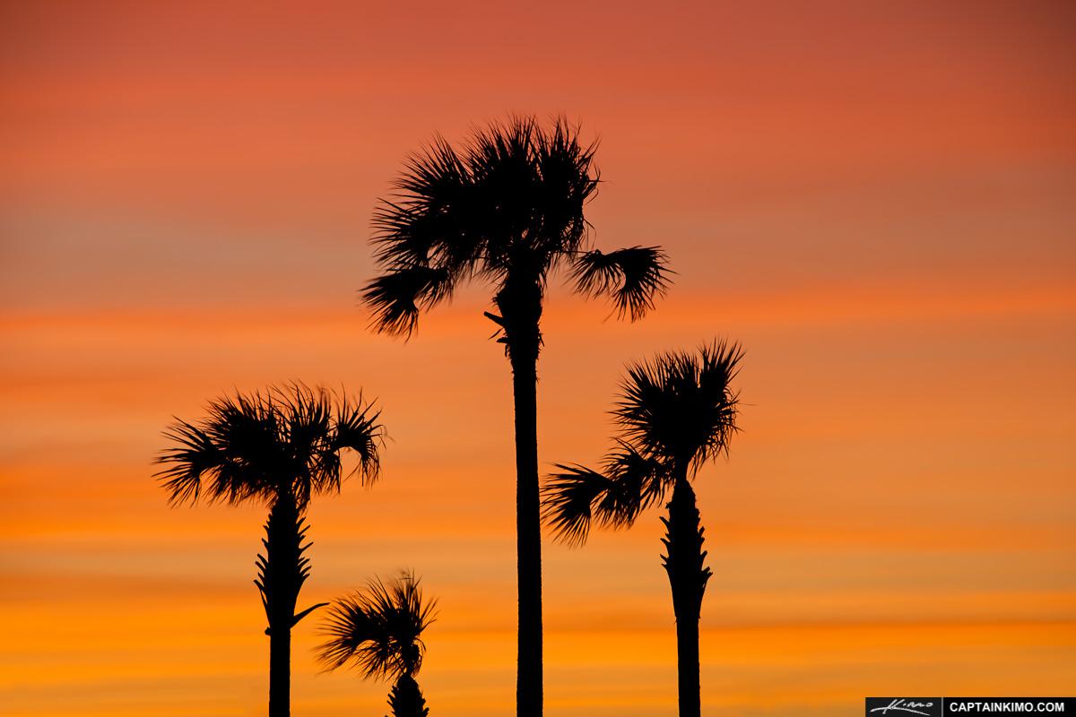 beautiful palm tree wallpaper 1200x800