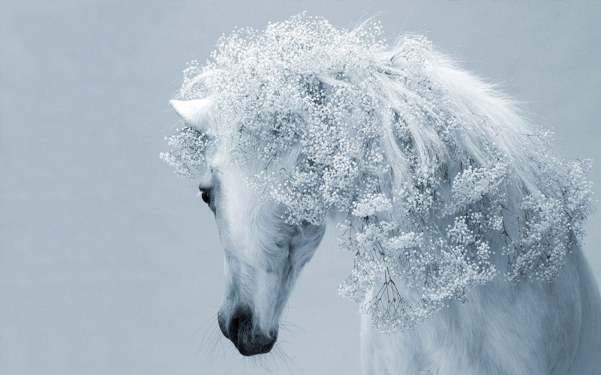 Free Download Beautiful White Horse Wallpapers And Images