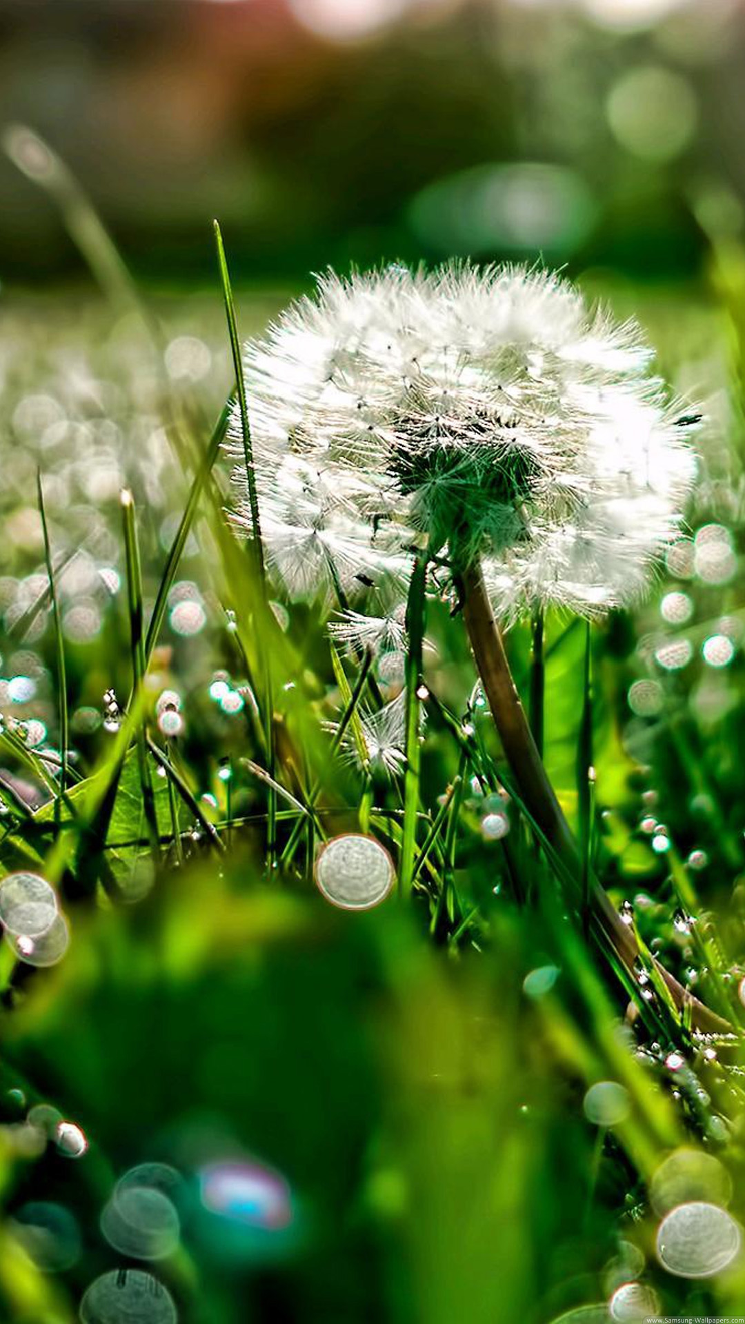 Dandelion HD Lock Screen 1080x1920 Samsung Galaxy Note 3 Wallpaper 1080x1920