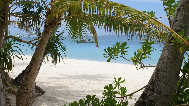 Palm trees on a tropical beach Widescreen Wallpaper   3958 1360x768