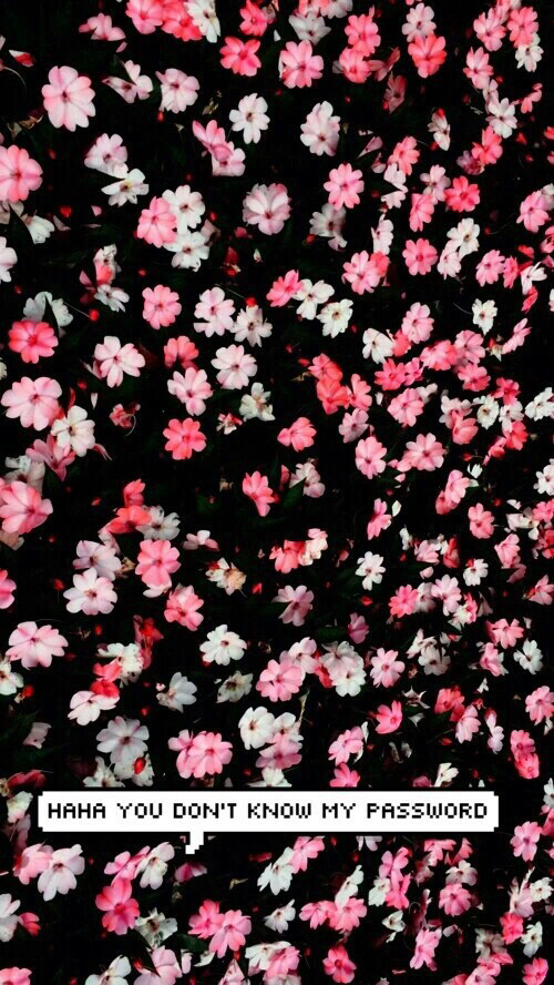 cute flowers wallpaper dont touch my phone   image 2919043 by 500x888