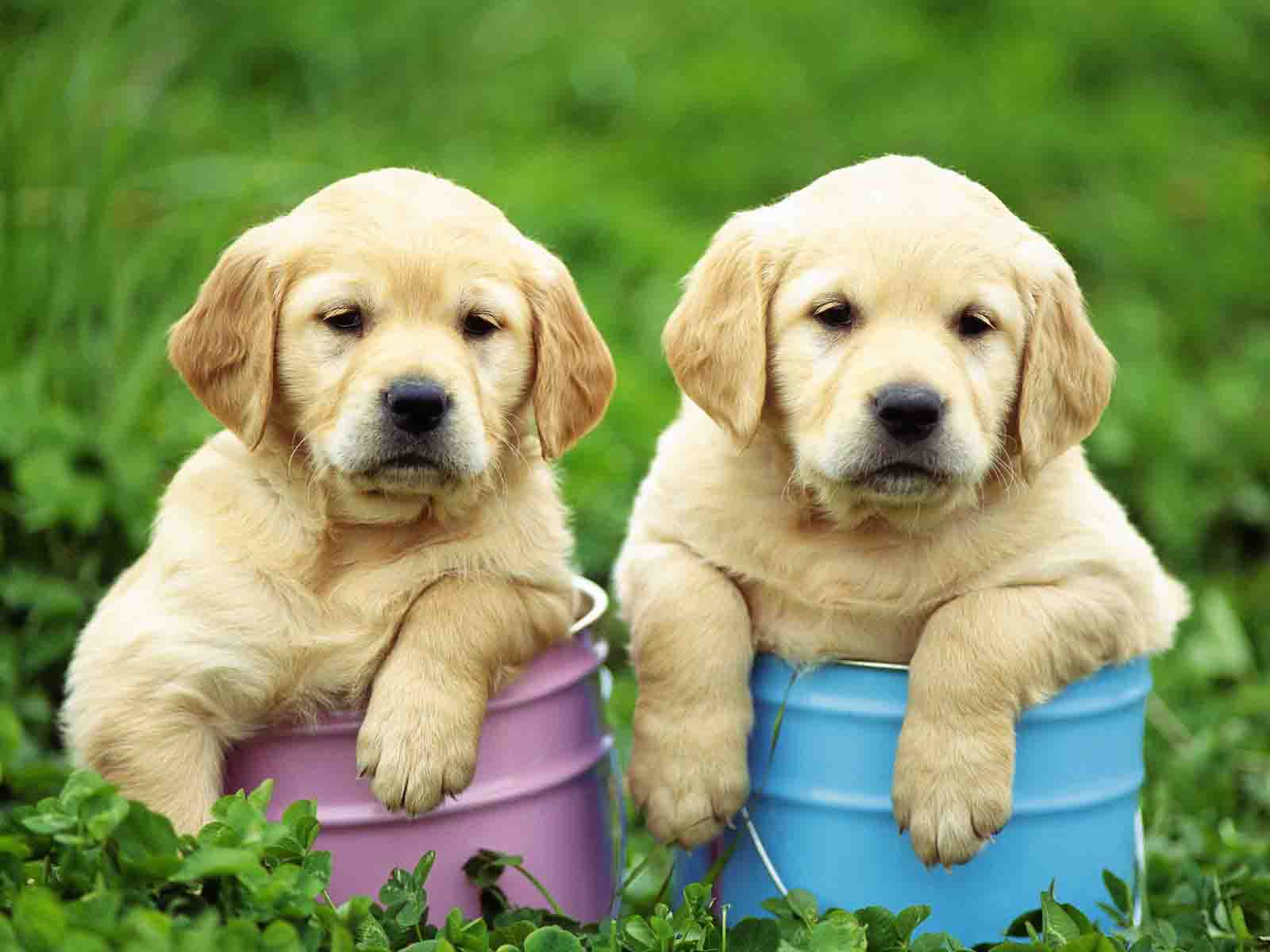 actress movie popular CUTE PUPPY HD WALLPAPERS 1600x1200