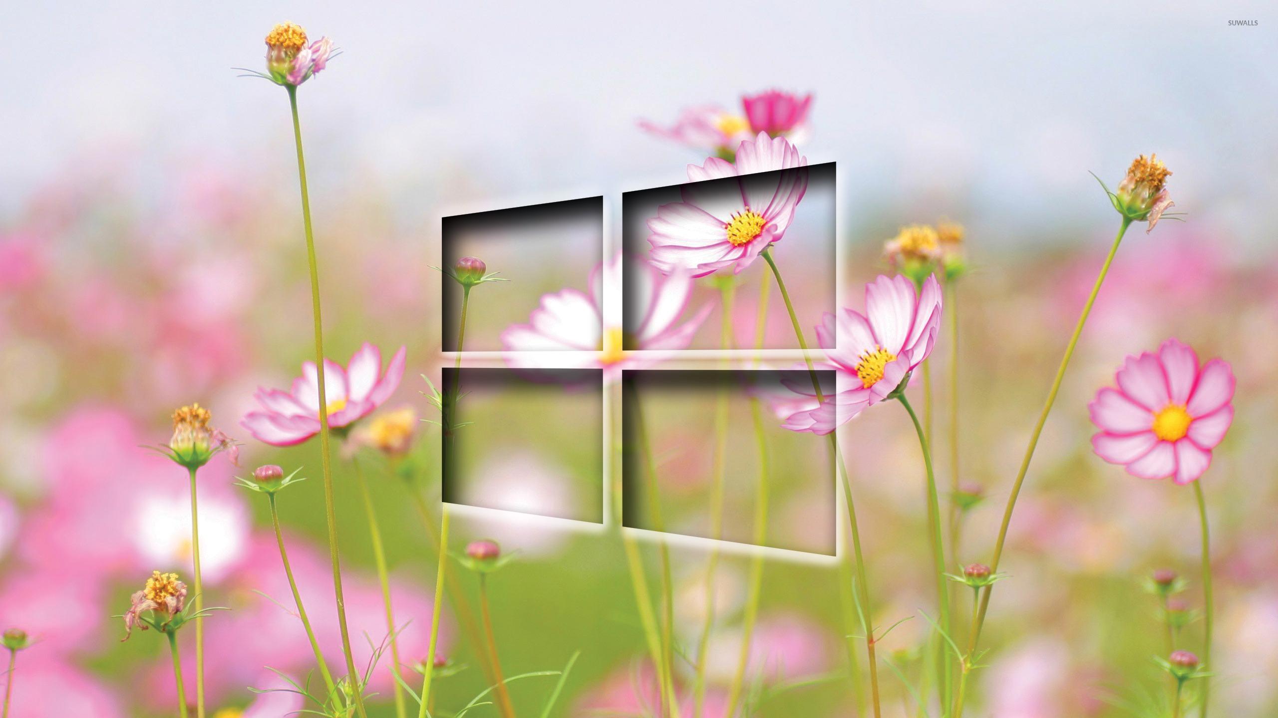 Windows 10 transparent logo on cosmos blossoms wallpaper 2560x1440 2560x1440