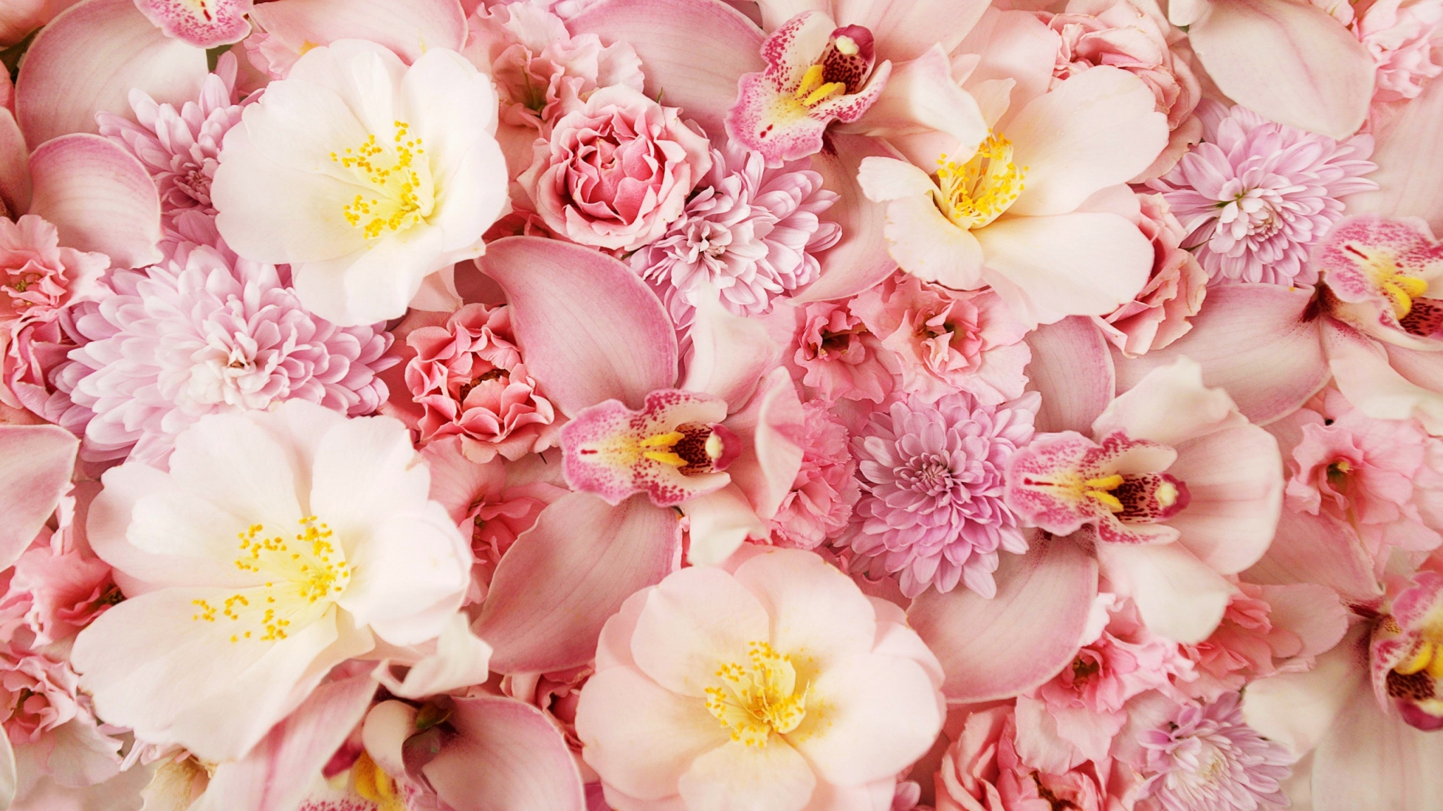 Flowers Wallpapers Pink Orchids 1058 2560x1600 pixel Exotic 2048x1152