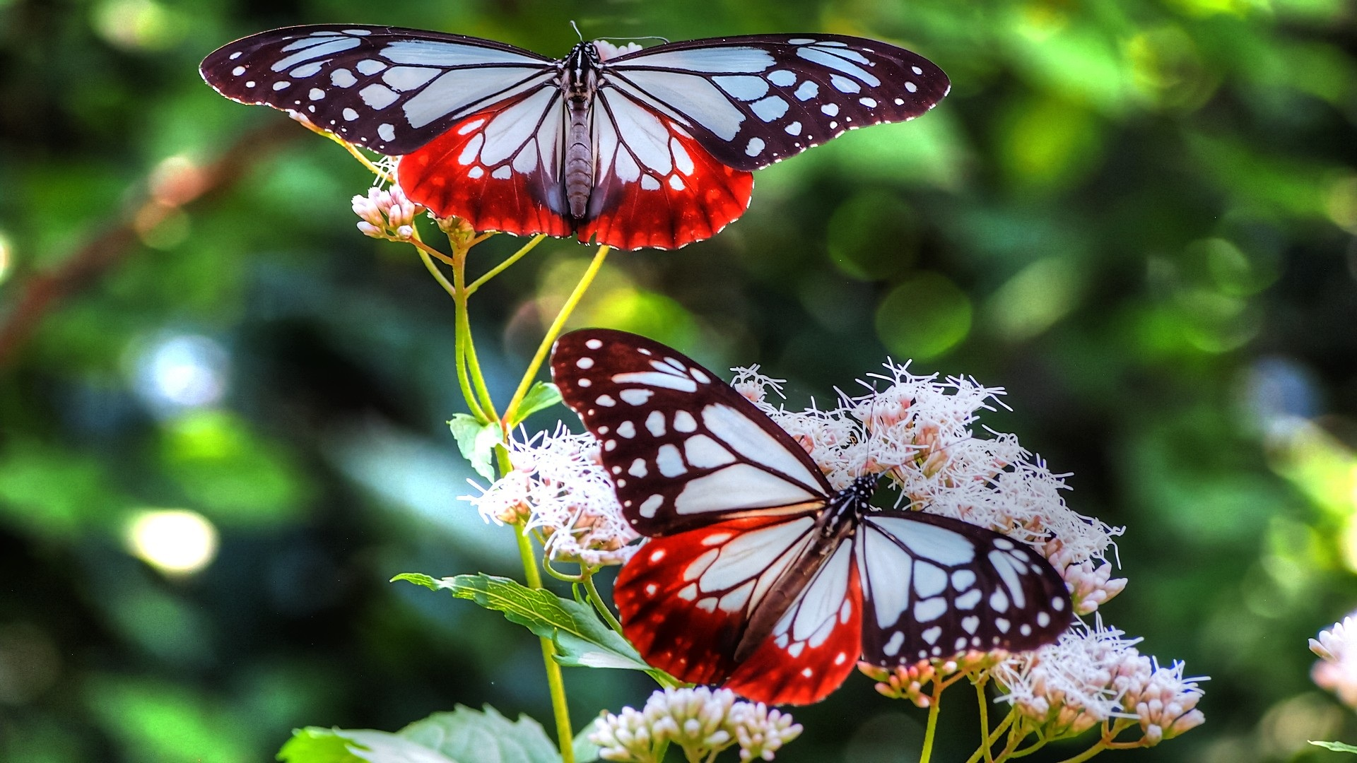 images of flowers and butterflies backgrounds