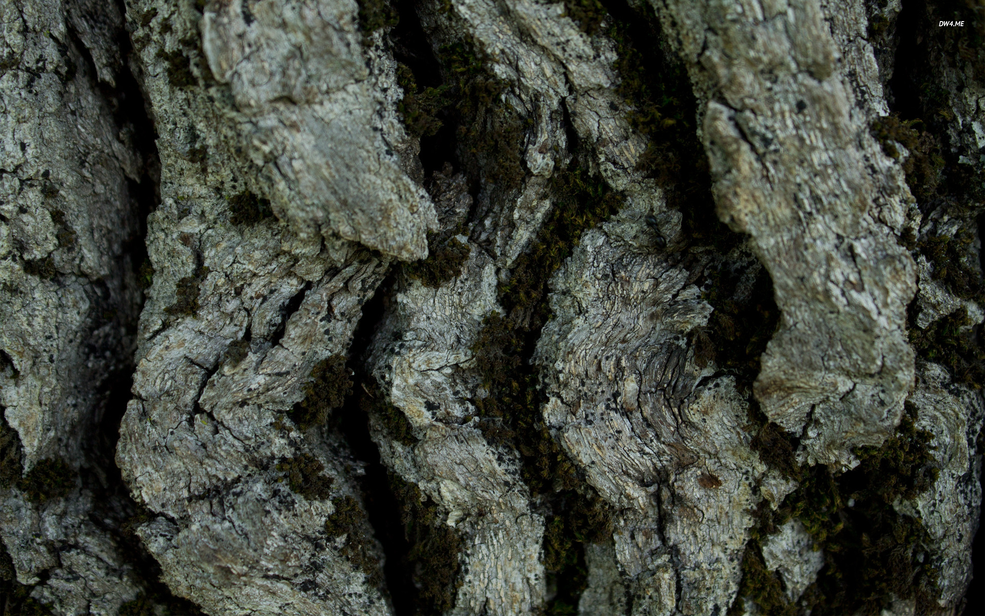 Tree bark wallpaper   Photography wallpapers   377 1920x1200