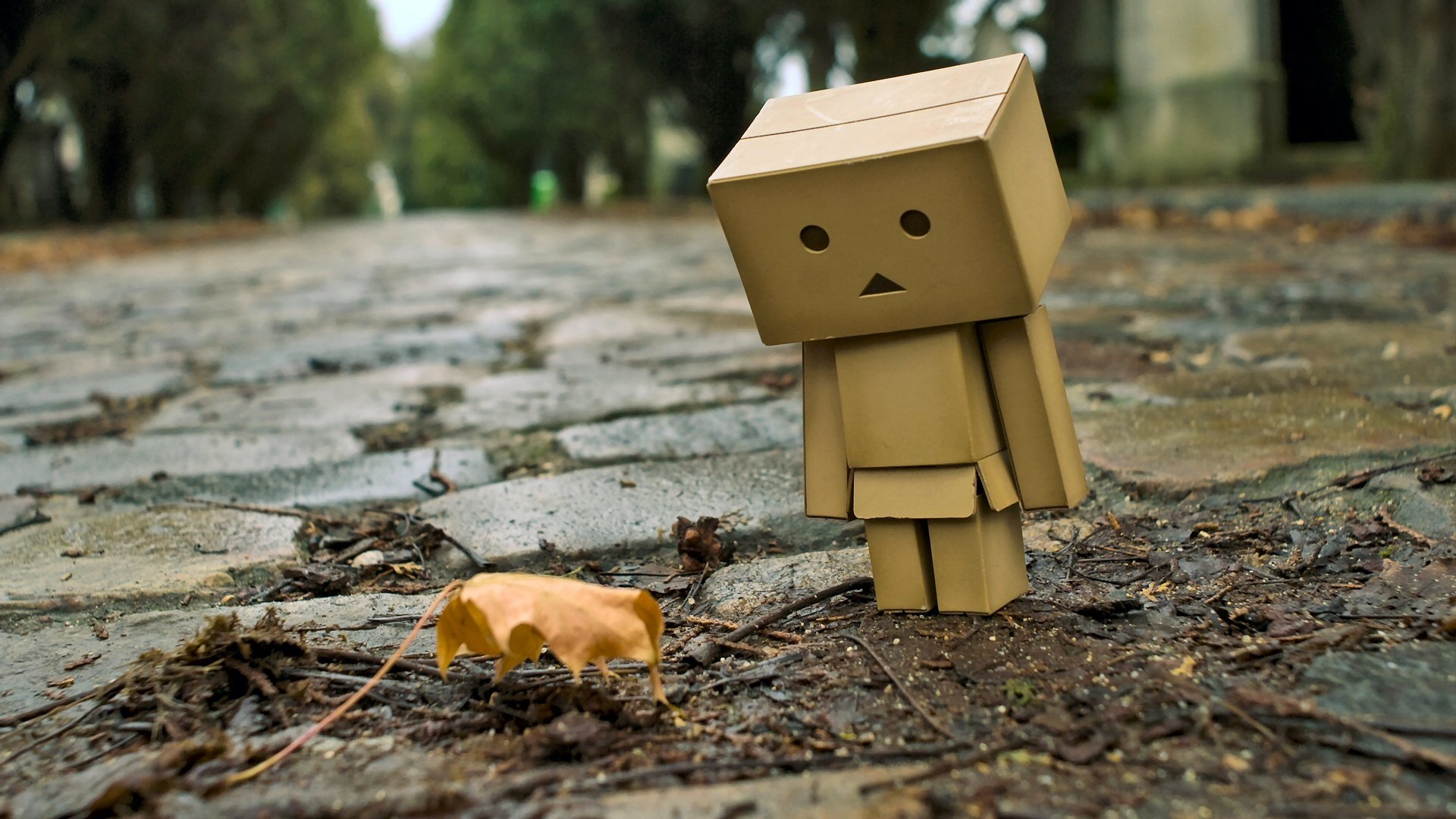 99 Danbo HD Wallpapers Background Images 1920x1080