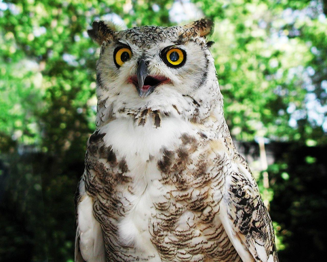 Hoot Owl Wallpaper - WallpaperSafari Owl City Ocean Eyes