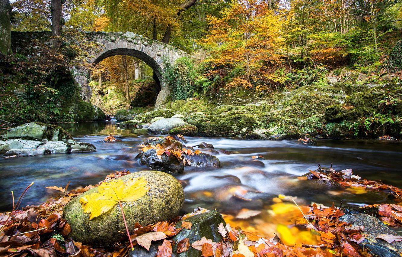Wallpaper autumn forest leaves bridge river Northern Ireland 1332x850