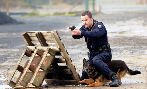 police dog tries to find the only safe place he can courtesy slate 568x346