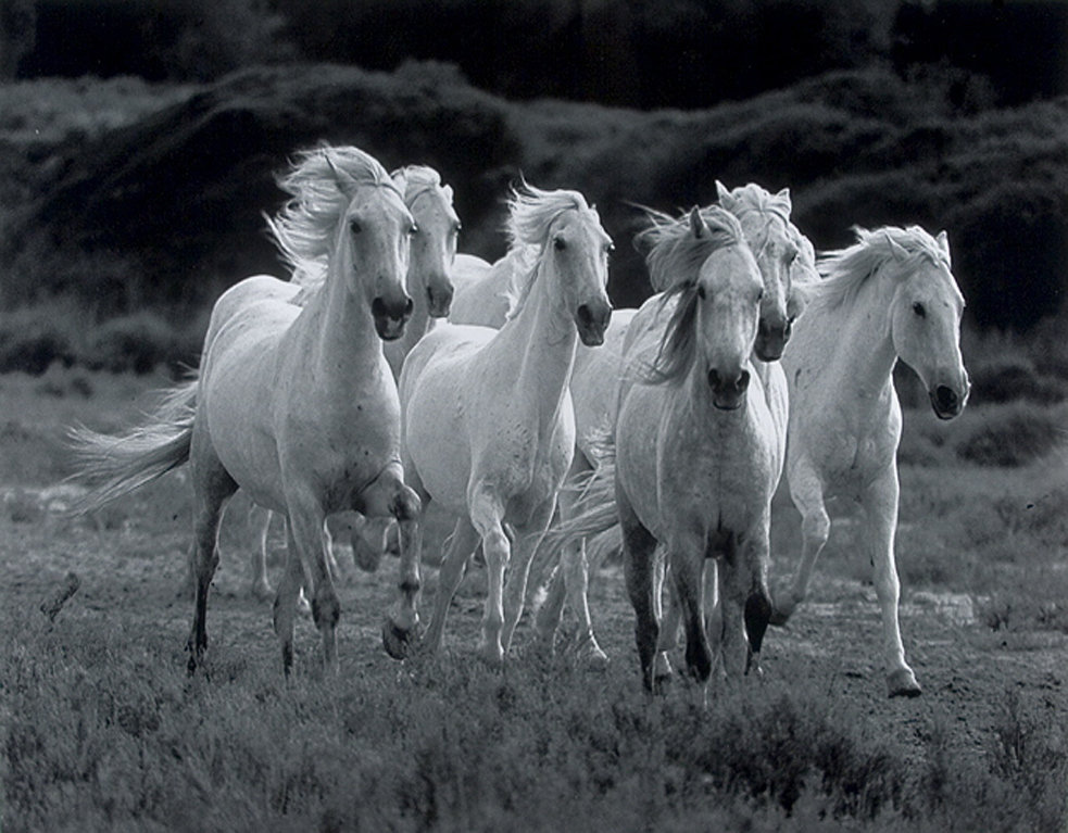 Free Download Wild Horses Wallpapers Zone Wallpaper Backgrounds