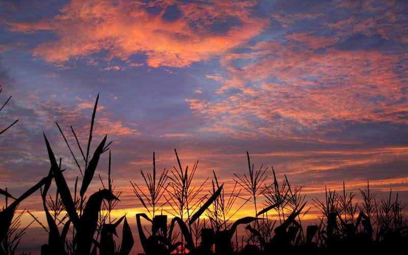 High resolution Sunset over Cornfield desktoplaptop wallpaper Listed 800x500