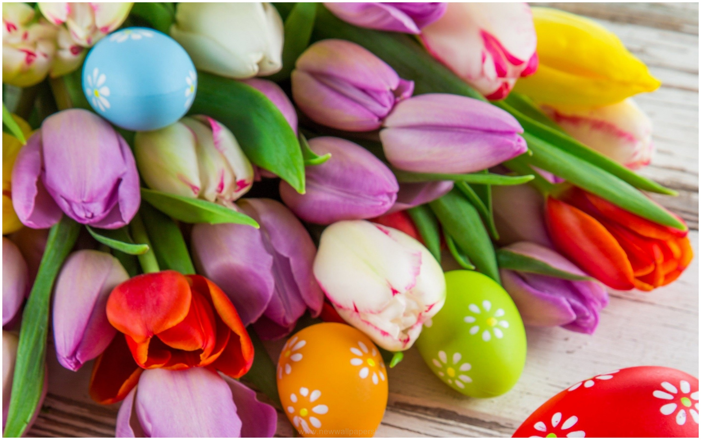 EASTER EGGS AND TULIP FLOWERS HD WALLPAPER 9HD Wallpapers 2732x1714
