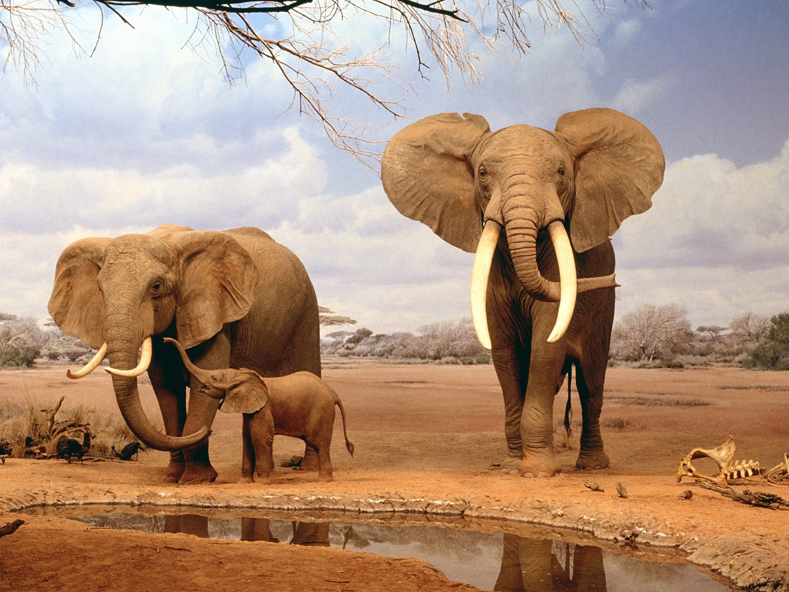 baby elephant wallpaper desktopjpg 1600x1200