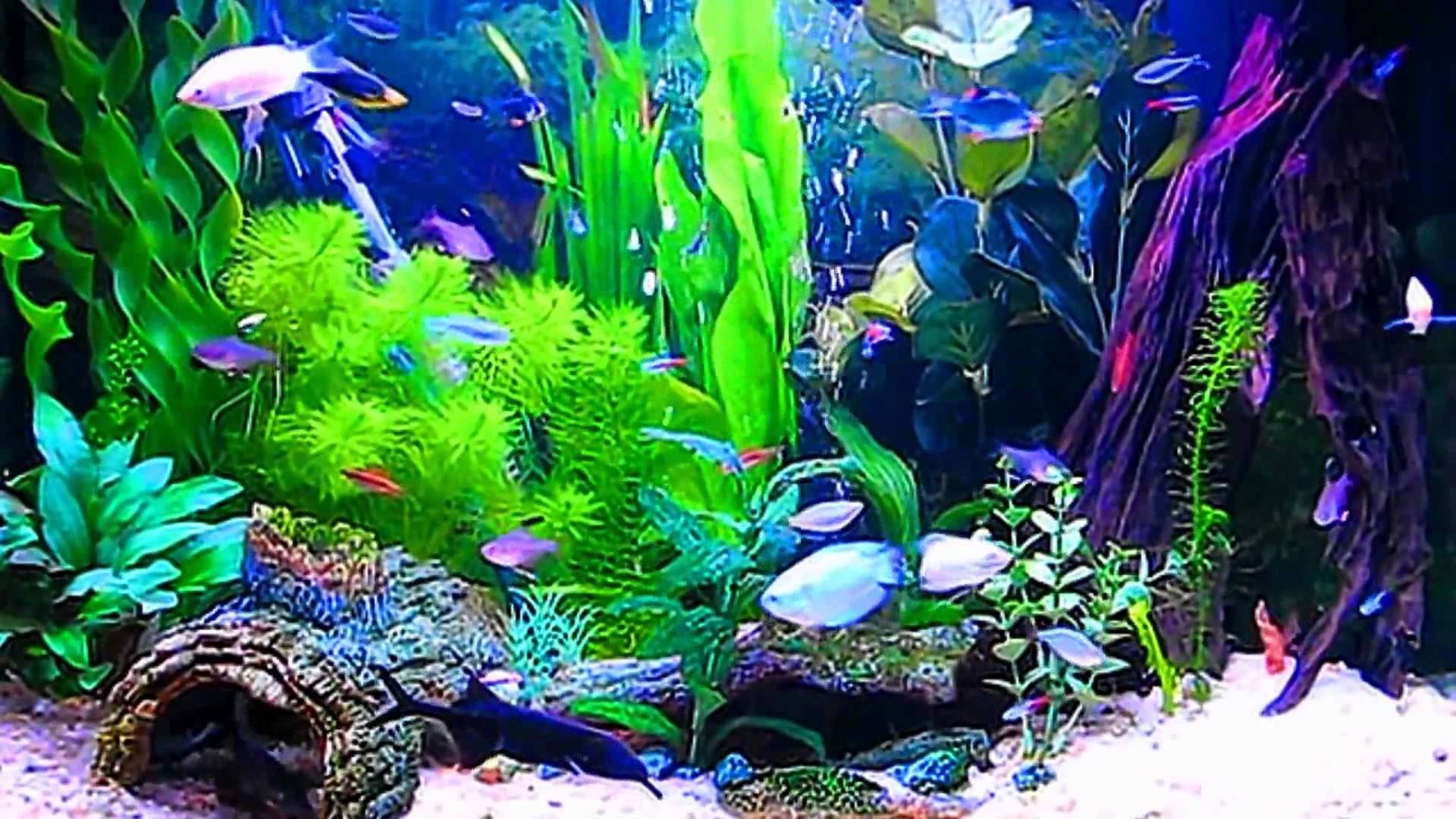 HD Aquarium ScreenSaver Windows and Android Full HD 1920x1080