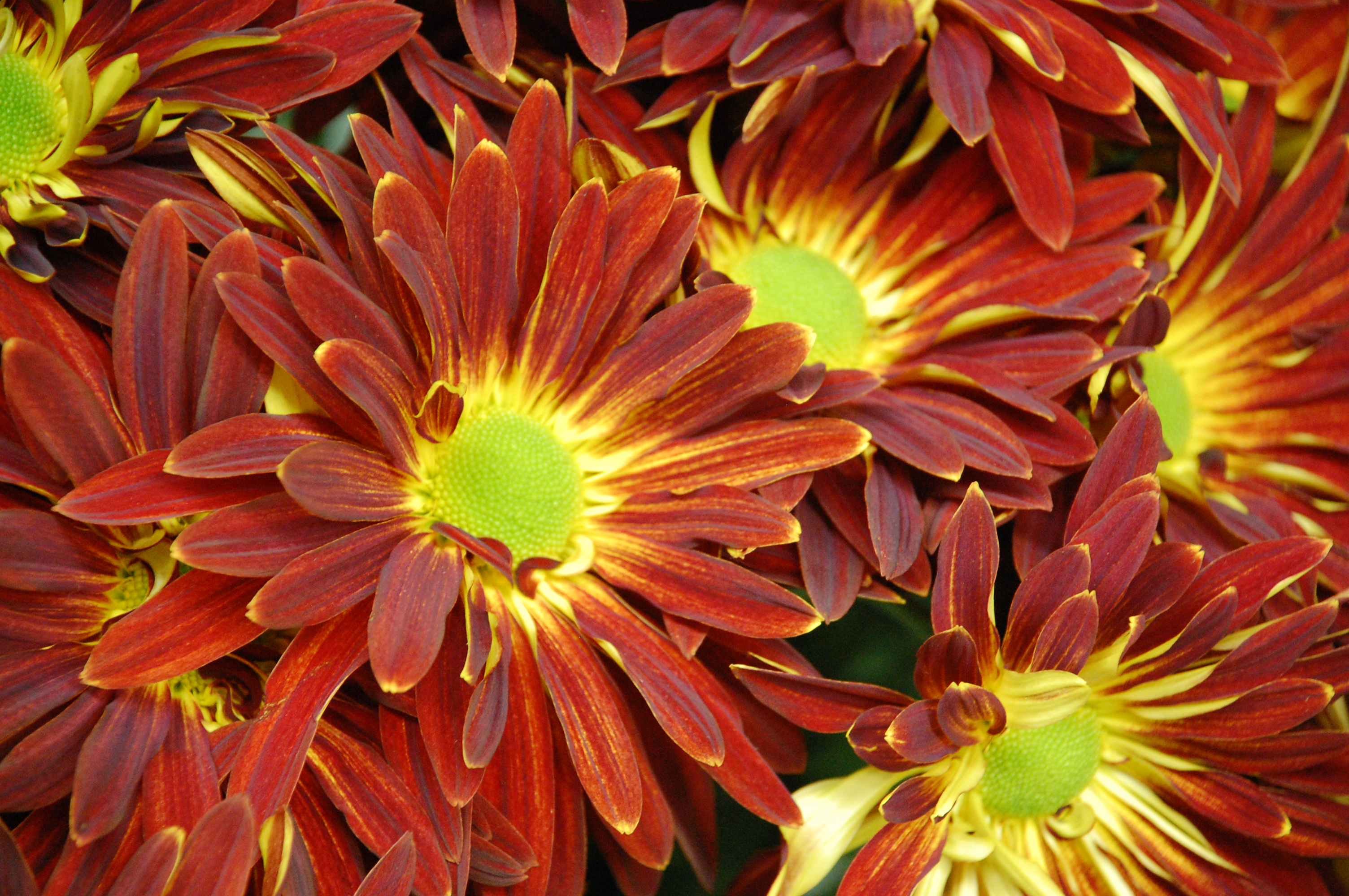 fall flowers wallpaper by - photo #43