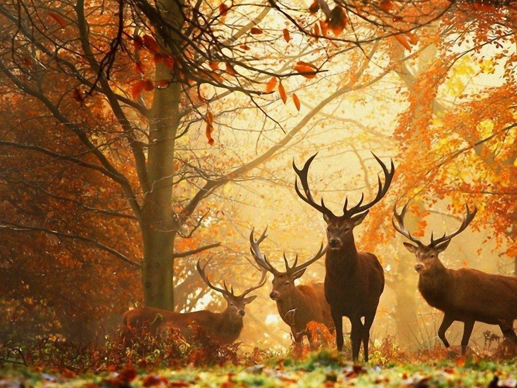 wallpaper Autumn Season Wallpapers 5 1024x768
